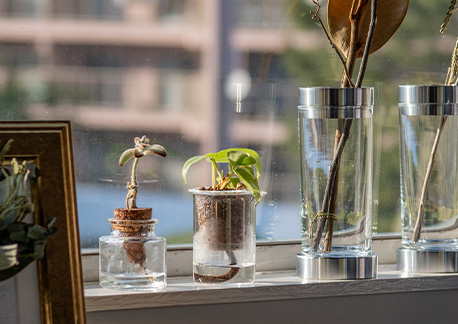窓際の植物たち