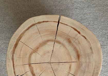 丸太の断面
